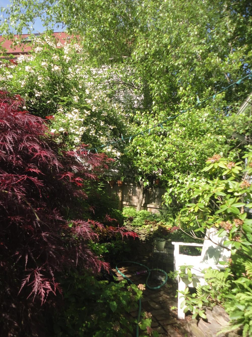Buffalo Garden Walk Stories - Ellie