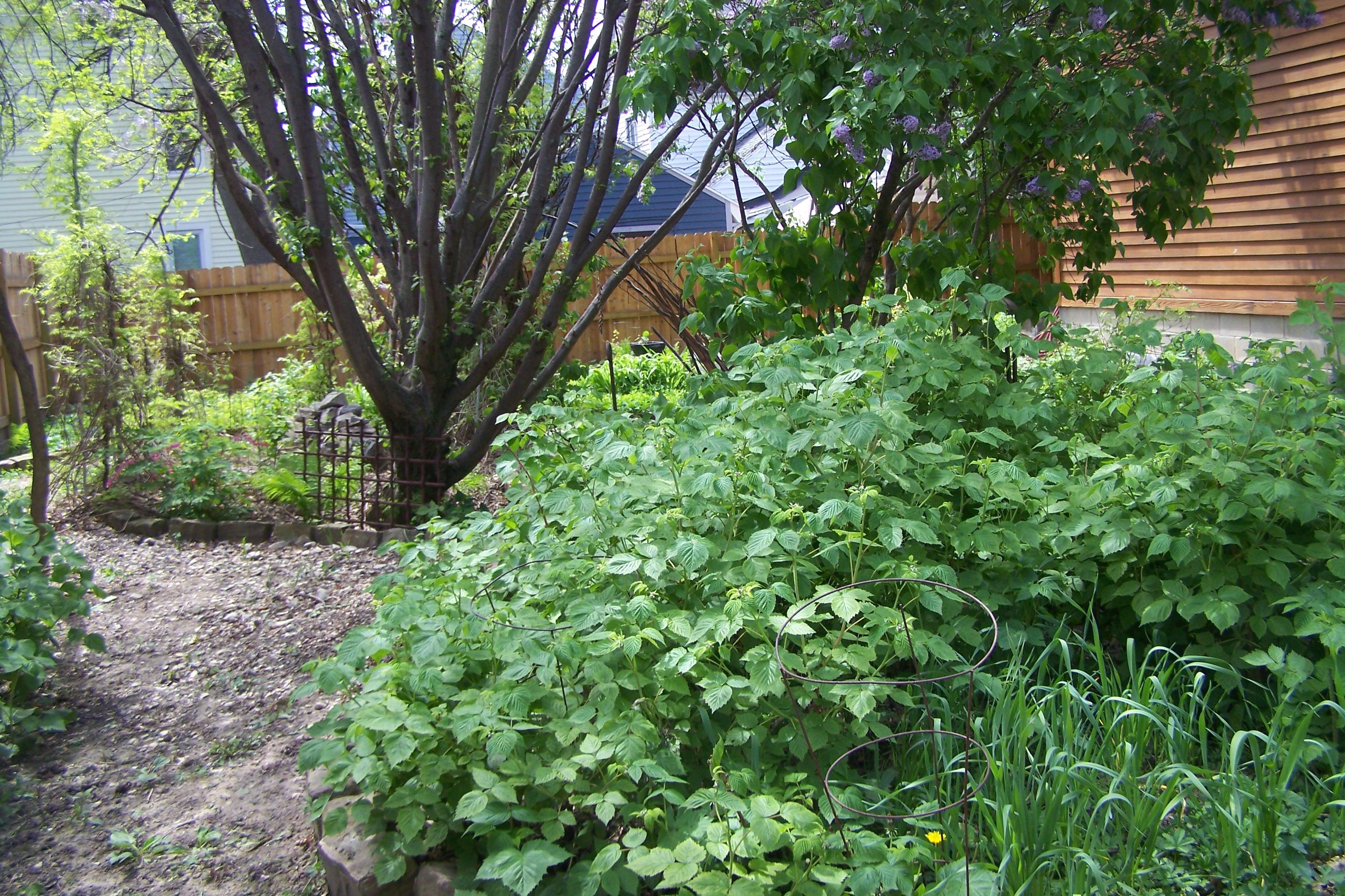 Buffalo Garden Walk Stories - 48 Tenth Street